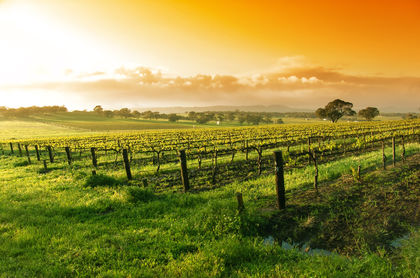 Australia Agriculture, Information about Agriculture in Australia