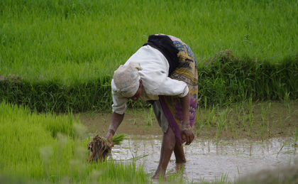 Nepal Agriculture, Information about Agriculture in Nepal