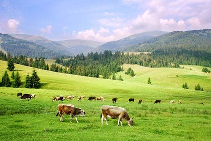 Kiev Ukraine News Blog: Ukraine Farmers Suffer In Worst Drought ...